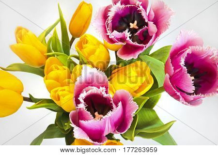 Floral arrangement of yellow and needle-like pink tulips on gray background.Spring bouquet.