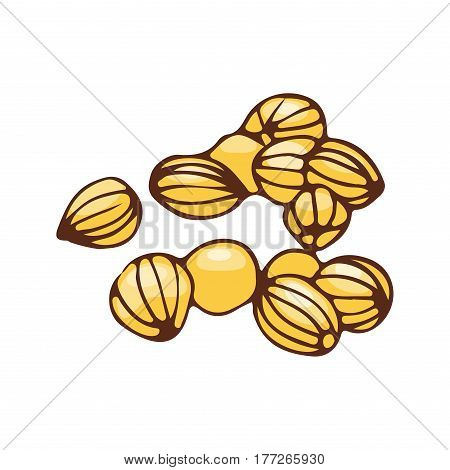 Coriander seeds isolated on white background organic spice condiment and hand drawn food ingredient aromatic seasoning cooking vector illustration. Flavoring gourmet nature coriandrum.