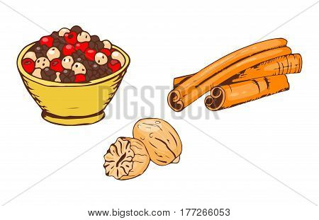Colorful spices food herb cooking powder seasoning cuisine and various group cinnamon ingredient pepper spice chili dry curry kitchen vector illustration. Handdrawn indian organic condiment bowl.
