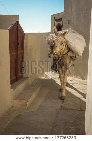 Traditional Greek Donkeys In Oia On Santorini Island In Greece