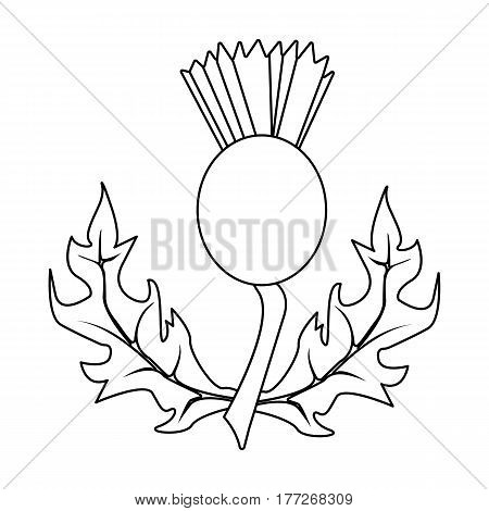 Thistles with green leaves.Medicinal plant of Scotland.Scotland single icon in outline style vector symbol stock web illustration.