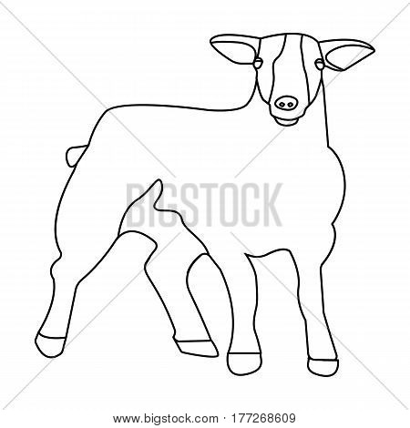 Little white mountain sheep.Scottish fold sheep.Scotland single icon in outline style vector symbol stock web illustration.