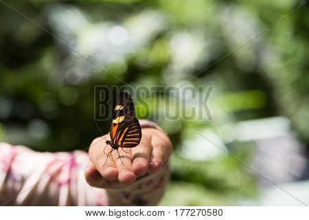 Monarch butterfly sitting on the girl hand