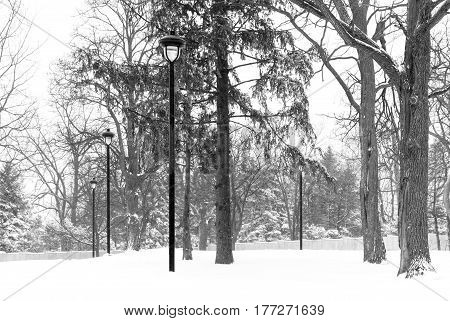 Snow storm park scene with ornate black lamp posts gray fence and tall pine trees