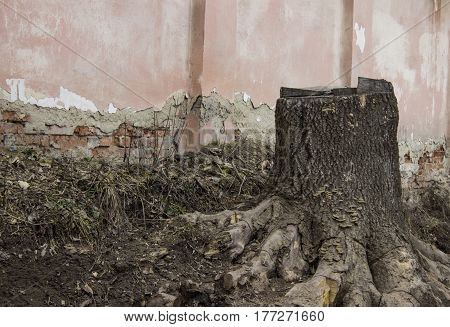 Old Stump With Cracked Brick Wall