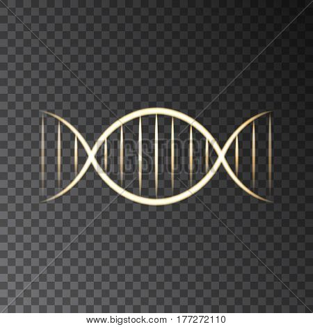 Gold neon DNA helix isolated on transparent background. Vector molecule for skin care organic cosmetic products and science templates.