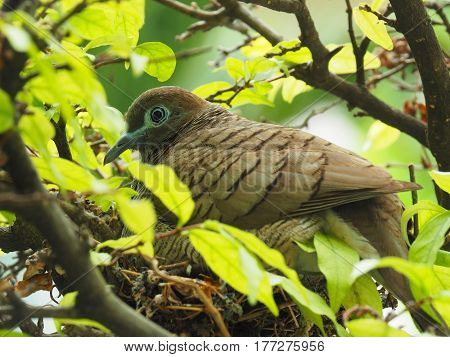 Close Up Of Bird In Bird's Nest