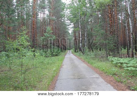 road to nowhere among the green pine forest