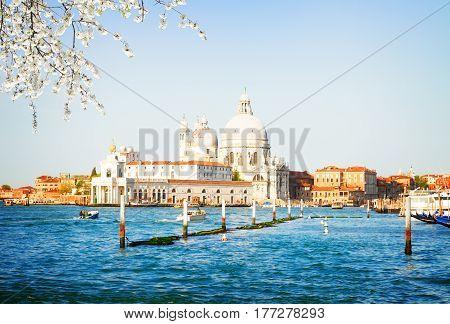 Basilica Santa Maria della Salute over Grand canal water at sunny spring day, Venice, Italy