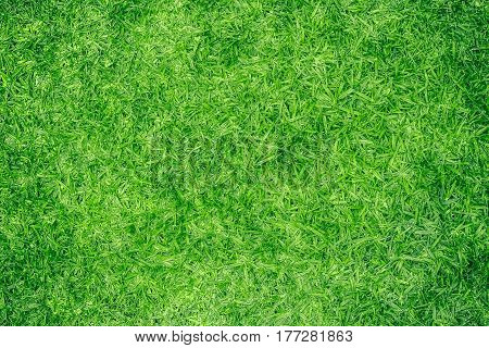Green grass background texture. Image from the top view