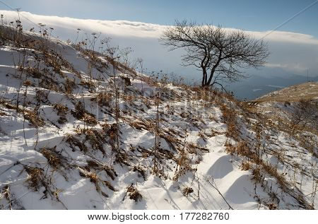 Spring landscape with the last snow. A lonely tree on a hill in a mountainous area