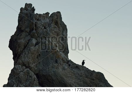Silhouette of cormorant bird and rocks against a background of clear sky. Wild nature by the sea