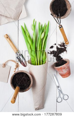 Spring Bouquet Of Tulips And Garden Tools