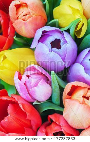 Bouquet of various bright  tulips close up