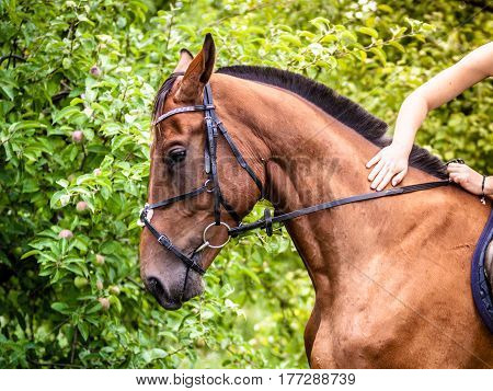 Young Woman Stroking And Sitting On Horse