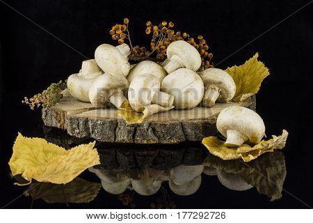 Still life with mushrooms autumn leaves and twigs on a tree stump on a black background with reflection