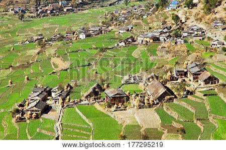 Dogadi village with terraced rice or paddy field - beautiful village in Western Nepal