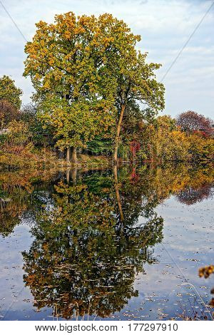 The tree on the shore of the pond and reflection in water
