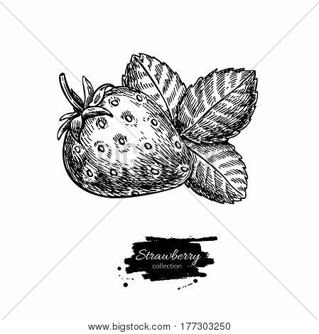 Strawberry vector drawing. Isolated hand drawn berry and leaf on white background.  Summer fruit engraved style illustration. Detailed vegetarian food. Great for label, poster, print