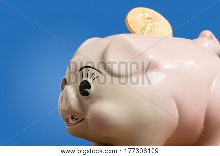 Large gold coin being inserted into a pottery piggy bank. Macro show with the focus on the face and eyes of the pig to illustrate savings or investment