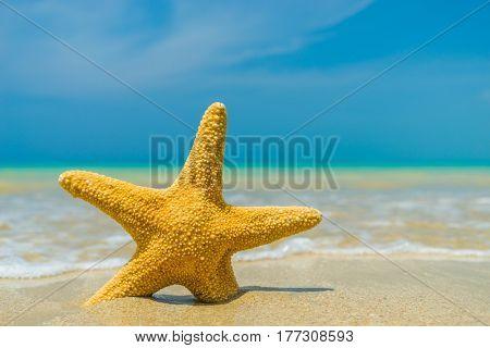 Starfish on the tropical  beach on a sunny day