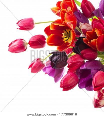 Beautiful bouquet of purple tulips isolated on white