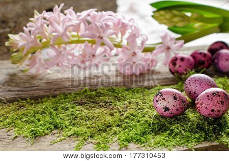 Beautiful Easter Background With Green Moss And Pink Hyacinth