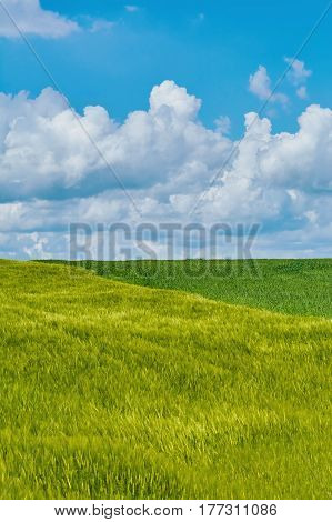 Image of Green Field under the Cloudy Sky