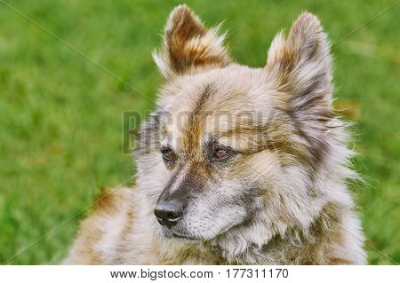 Close-up Portrait of Dog against Green Background