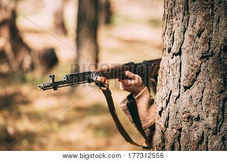 Re-enactor Dressed As Russian Soviet Infantry Soldier Of World War II Hidden With Rifle Weapon In An Ambush Near Tree In Forest. Close Up On Soviet Rifle In Hands
