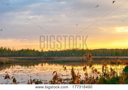 Sunset over a clean natural lake in the forest