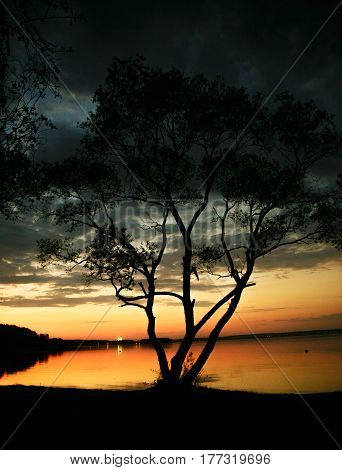 Silhouette of a tree near natute lake in sunset
