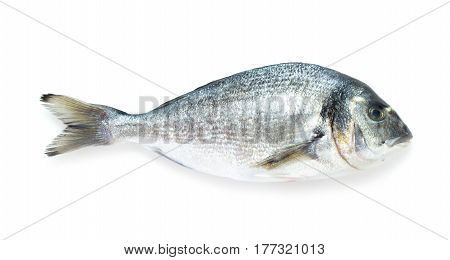 close-up view of gilt-head bream isolated on white background