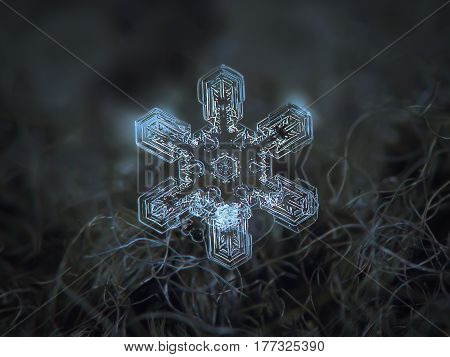 Macro photo of real snowflake: large snow crystal of star plate type with six simple, straight arms and complex, beautiful inner pattern. Snowflake glittering on dark gray wool background in natural light of winter sky.