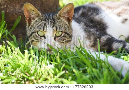 Young cat lie down on green grass under a tree.