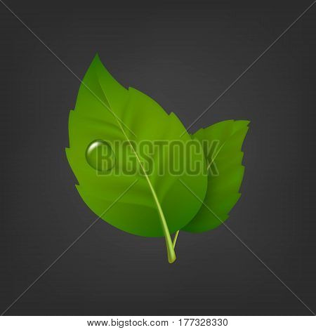 Vector background with green leaf pair and drop of dew. Realistic icon, design template. EPS10 illustration.