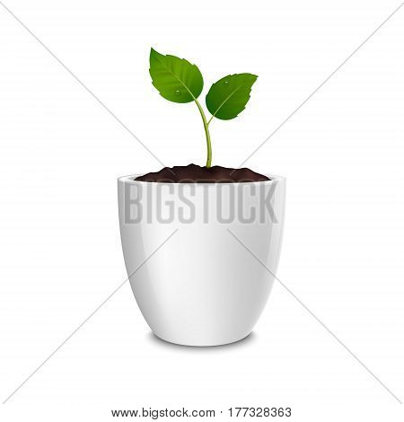 Vector growth concept. Design template of realistic icon of the sprout in a white flower pot, isolated on white background. EPS10 illustration.