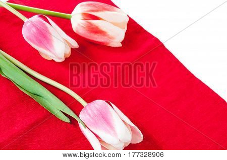Spring Beautiful Tulips On A Red Background
