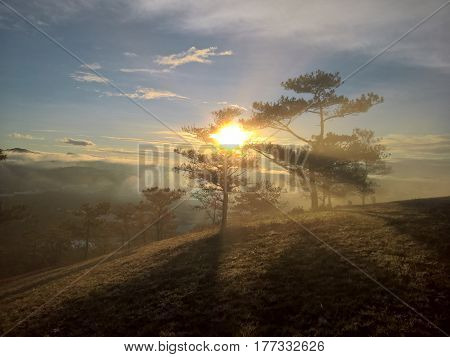 sunrise over hill with the sun radiating golden rays pierced the hills with pine trees covered with morning dew beautiful ray beam forming to welcome the new day so simple in Da lat, Vietnam