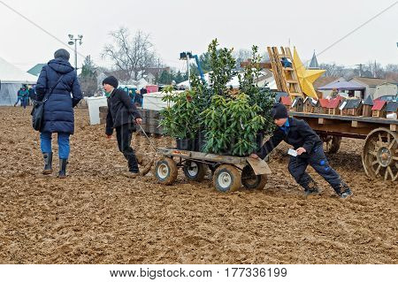 PENRYN PENNSYLVANIA - MARCH 18 2017: Amish boys haul potted plants for a buyer on a muddy day at the annual Amish Mud Sale. This auction benefits Penryn Fire Co.#1 and Limerock Parochial School.