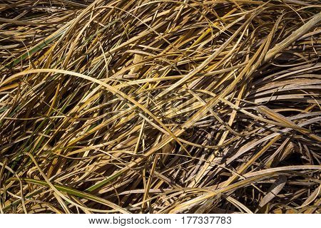 dried autumn yellow grass texture background photo
