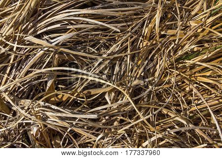 dried autumn yellow grass texture background image
