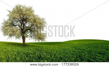 Landscape with tree on the green field and  white sky.
