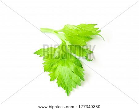 Fresh celery leaf vegetable on white background healthy food concept