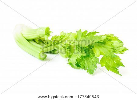 Fresh celery vegetable on white background healthy food concept