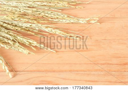 The Paddy Rice On Wooden Background. Ears Of Paddy Rice, Copy Space