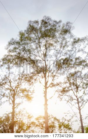 Abstract blurred photo of green foliage in Public Park and sunlight in the background.