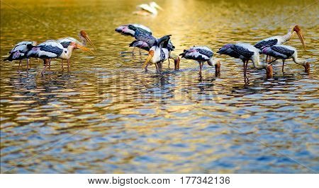 A shot of a flock of painted stork in Wetland, Putrajaya, Malaysia