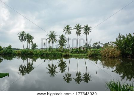Rural Scenery In Hoi An, Vietnam