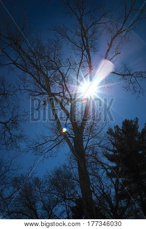 Sun sparkling through oak tree branches in a deep blue mid-day sky #3